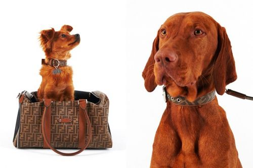 Fendi Launches Pets Accessories Collection