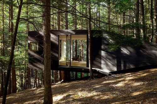 The Half-Tree House Is the Adult Version of Your Childhood Dream Home