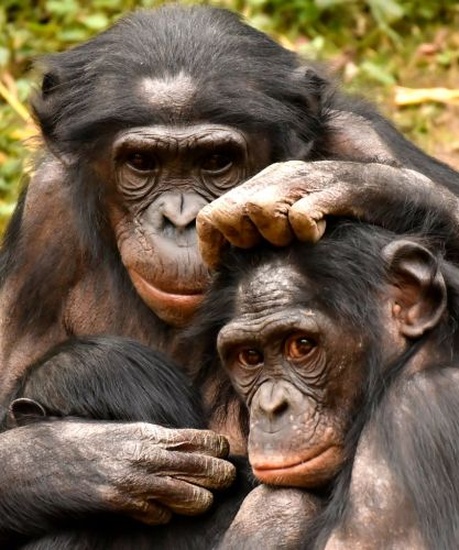 Female Power and Pleasure Go Together. Just Ask Bonobos