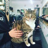 "This Cat ""Works"" at a Salon by Easing Customers' Haircut Anxiety"