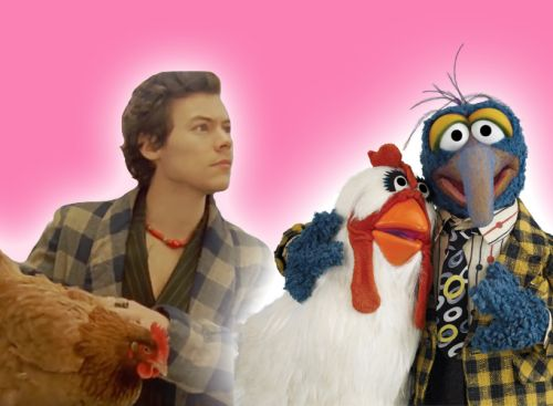 Let's Just Say It: Gonzo Has Already Outstyled Harry