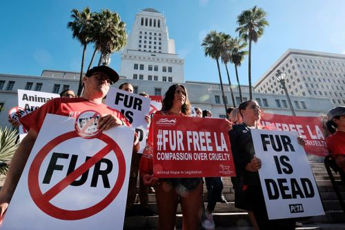 Los Angeles Officially Bans Fur Sales