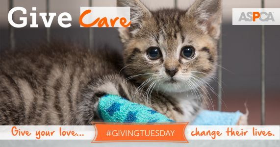Consider the Animals Hurt and Lost in the Wildfires this Giving Tuesday