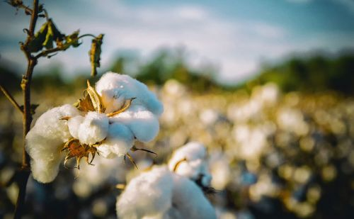 H&M Group, Gap Inc. top Better Cotton Initiative 2018 Leaderboard