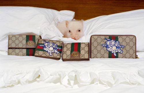 Look at all these cute pigs in Gucci's new campaign