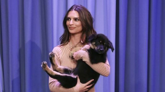 Emily Ratajkowski Loves 'Everything' About Her Puppy Colombo and We Totally Get It