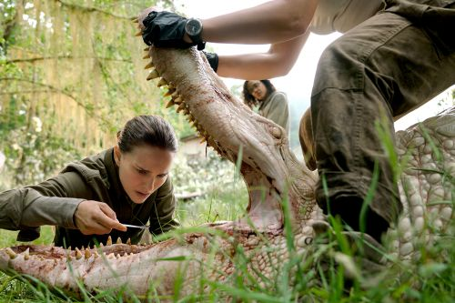 'Annihilation' has terrifying beasts unlike any you've seen