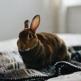 Why a Ban on Animal Testing Would Help the Beauty Industry
