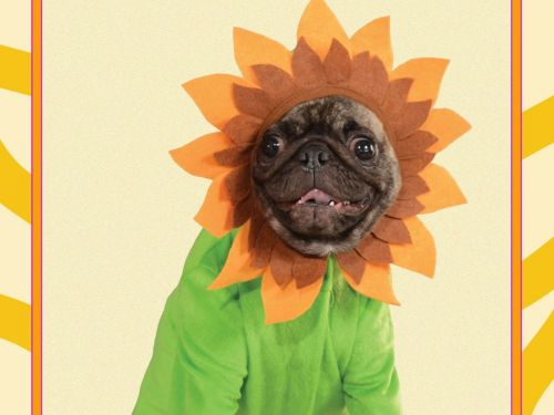 17 Cute Halloween Costumes Your Pet Will Hate