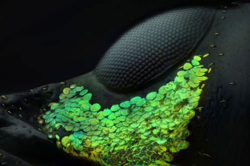 Winning Photos of the 2018 Nikon Small World Contest Show the Invisible World